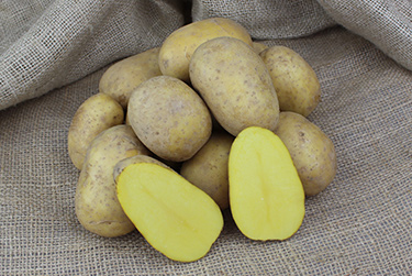 Kartoffelsorte Anuschka