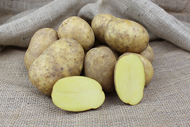 Kartoffelsorte Rita