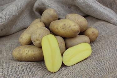 Kartoffelsorte Goldmarie