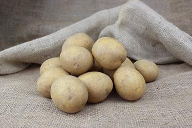 Kartoffelsorte Birte