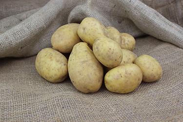 Kartoffelsorte Wega