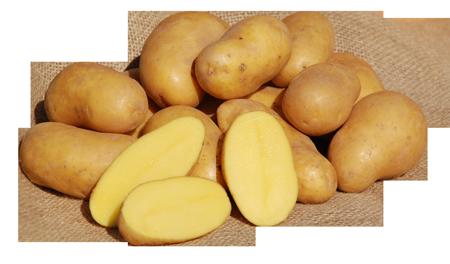 Bild von Kartoffeln vom Ederer Hof